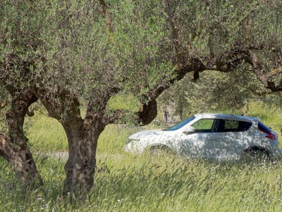 Unter Olivenbäumen